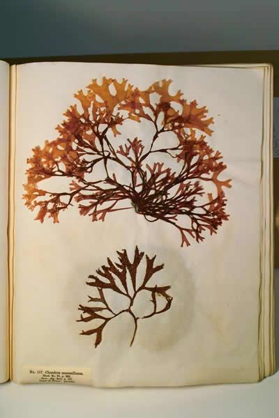 Gallery 11: Finders Keepers - Seaweed Album