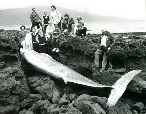 Gallery 10 - Case Histories: Cuvier Whale Skeleton
